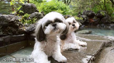 ペット専用露天風呂